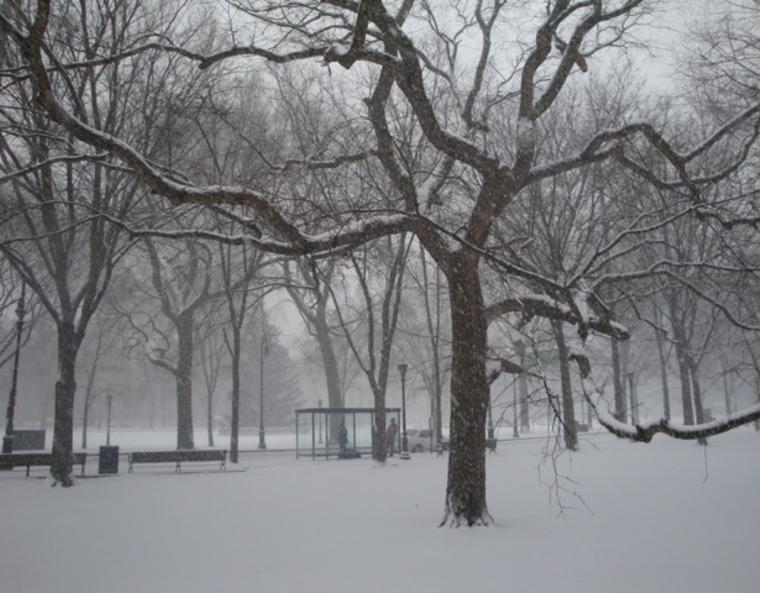 Snow completely covers the ground and tree branches in New Haven.