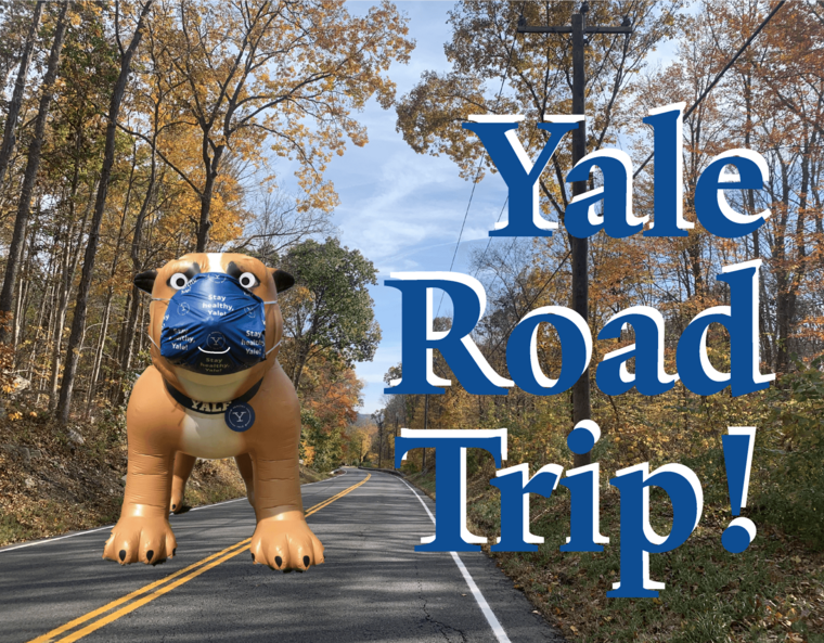 Fall road and inflatable bulldog