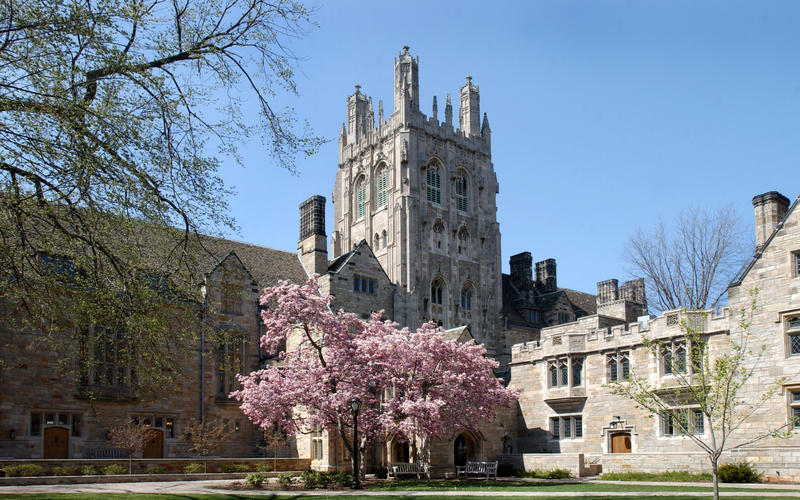 A flowering tree brightens The Branford College courtyard in Spring.