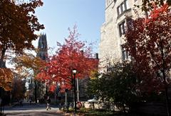 Autumn leaves in New Haven.